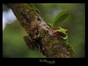 #costarica #workshopfotografico www.wildlifefoto.it